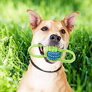 Dog Interactive Toy