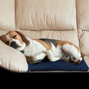 Amazon Com Petleso Dog Heating Pad Winter Warm Heating Pad