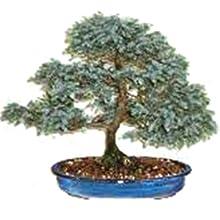 Limited Time Deal Nature S Blossom Bonsai Tree Kit 13 74 Reg 27 99 Mojosavings Com