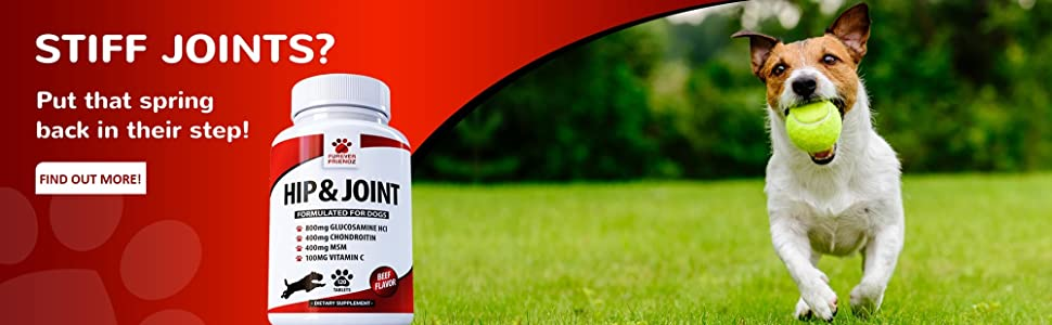 glucosamine for dogs with chondroitin msm vitamin c green lipped mussel for stiff hip and joint