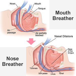 mouth breather VS nose breather