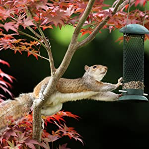 squirrel stealing peanuts from a bird feeder.