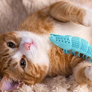 catnip chew care