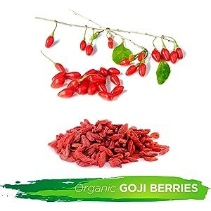 goji berries superfood fruit snacks anitoxidants low fat fiber protien immune support health organic