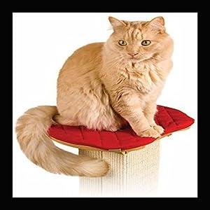 cat on post perch