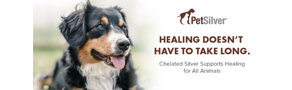 PetSilver Wound Care spray for rapid healing for all animals and pets. Healing can be fast!