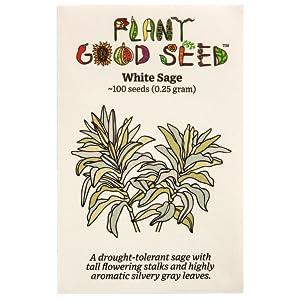 White sage hierloom aromatic sage plant seeds organin non gmo