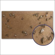 MothPrevention Trap - Trust
