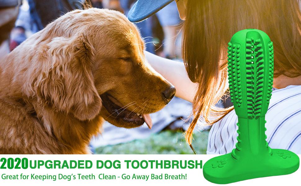 DOG TOOTHBRUSH11