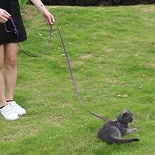 6 feet leash,black dog leash 6 feet,purple 3/8 leash,dog leash small