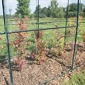 4 x 4 Plant Protection Tent Gardeners Supply Company Crop Cage