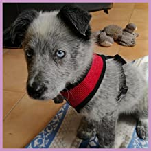 Soft mesh vest dog harness for puppies.