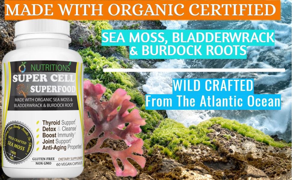 burdock root organic  burdock root powder  dried moss  sea moss plus  seamoss raw organic pills