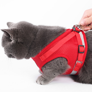 attached leash enjoy walk with your pet cat and escape proof walking