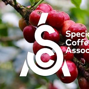 Specialty Coffee Association Certified