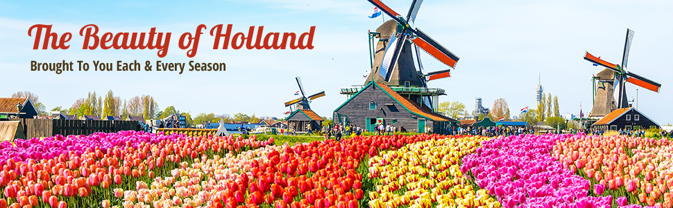 Beauty of Holland Flower Bulbs