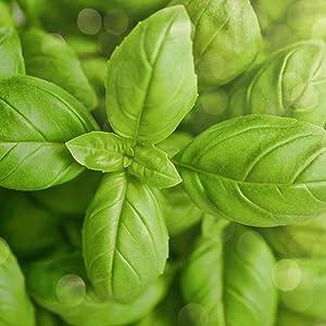 organic ingredients, vegan ingredients