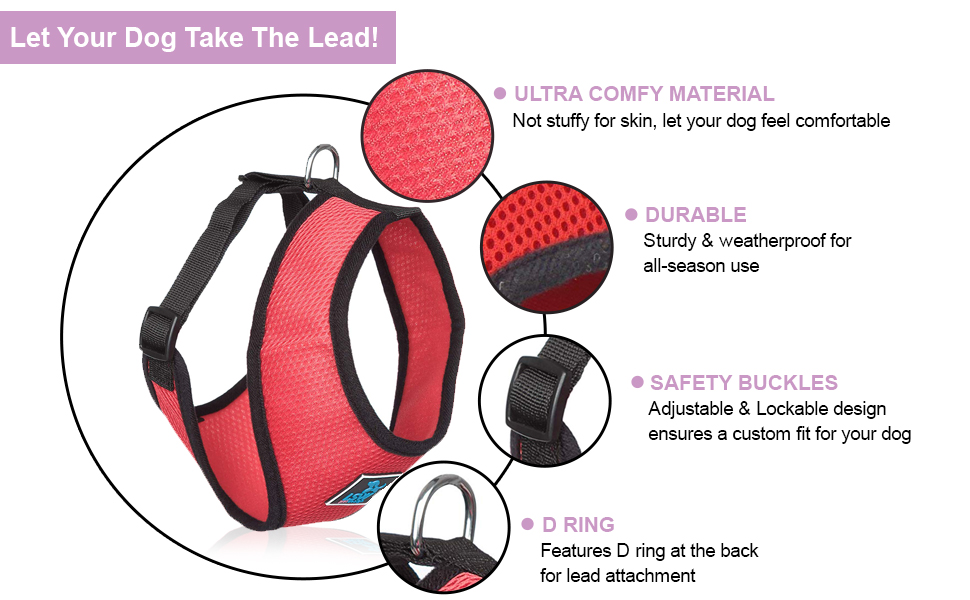 No pull walking belt for small dogs.
