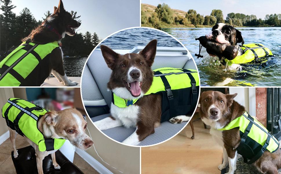 dog life vest