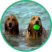 hip and joint pain relief dog muscle senior dog mature hemp arthritis pain relief chews turmeric msm