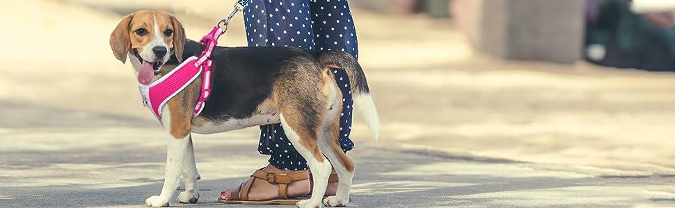 walk dog Fida black