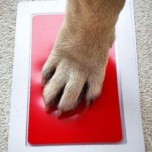 kit empreinte chien chat pawprindog badogshop tatouage empreinte cadre photo chien souvenir