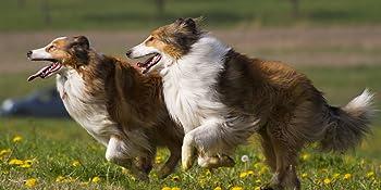 Hunde mit Hunde Vitaminen unterstützt Arthrose Hund Gelenk Pulver Gelenk Kapsel Chondroitin