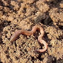earthworm-castings-soil