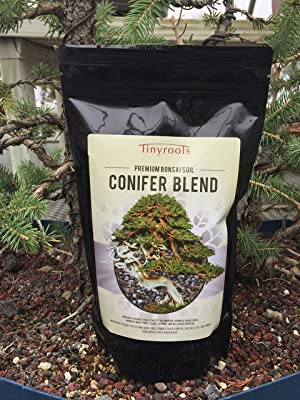 conifer soil
