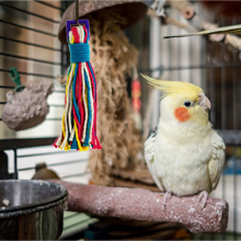 mirrors parrotlet plush a food tweeter swing feet sun perfect ropes canary chirping big