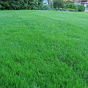 K31 Lawn