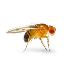Levante LEVFK30 /'Venus/' Insect Fly Killer 100m2-2 x 15 Watt Tube