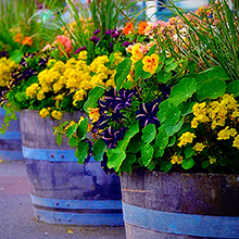 outdoor container soil, flower pots, annual flowers, container garden, potted flowers, organic soil