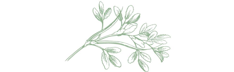 motherlove herb natural organic supplement support boost increase lactation milk supply nurse pump