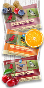 Suet berry variety 6 pack