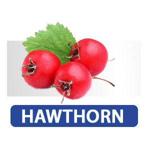 hawthorn supplement