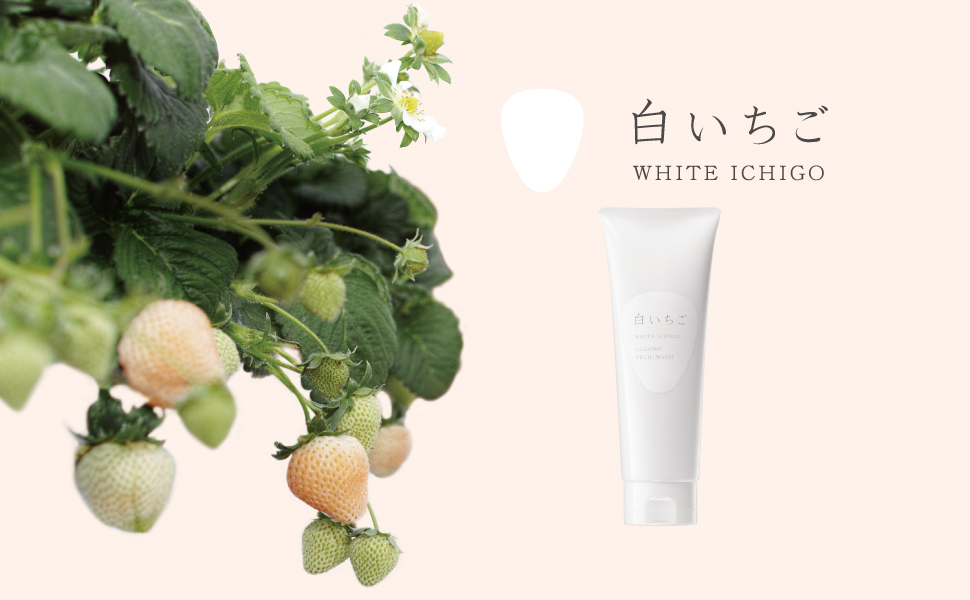 WHITE ICHIGO(ホワイトイチゴ) オーガニック テック-ウォッシュ