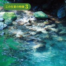 地下200mに眠る 湧き水を使用。