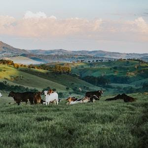 Bio Rinder aus Weidehaltung