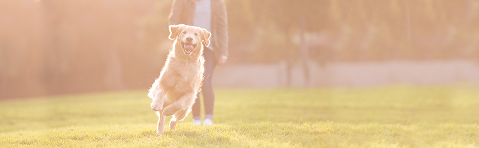 omega fish oil supplement for dogs