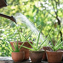 watering house plants with perfect plants liquid indoor house plant fertilizer office plant food