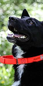 dogIDS Embroidered Martingale Dog Collars - Customized with Your Dog's Information