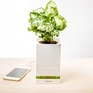 single legrow planter with a beautiful green plant, placed on a hub charging a mobile phone