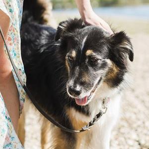 Ajustable y de F/ácil Control para Entrenar a los Perros para Que Dejen de Tirar L,Amarillo de Colores ILEPARK Cuello para Perros de Cabeza y Bozal de Adiestramiento Antitirones