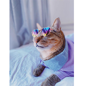 A cat wearing the cat sunglasses.