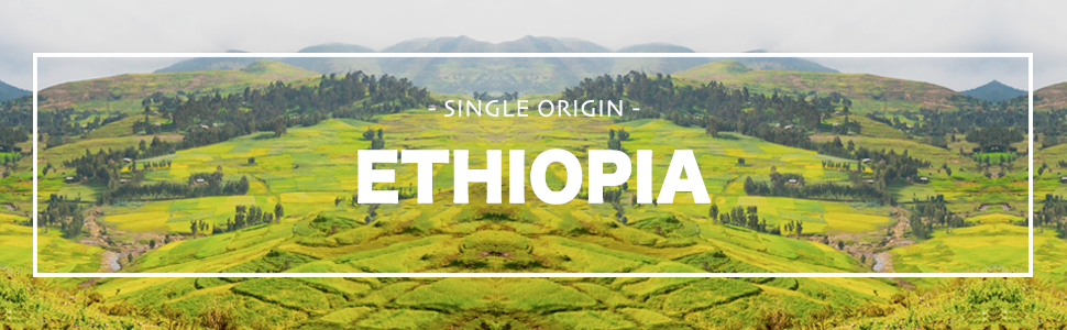 Organic Ethiopian Yirgacheffe Unroasted Green Coffee Beans Sidamo Arabica African Raw Single Origin