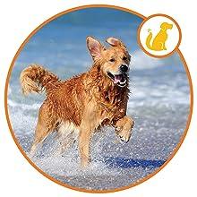 Brain citamin pet nutrition puppy vitamins omega dog chews skin supplement for dogs dog minerals