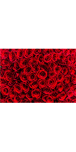 Red Rose Floral Wall Photography Backdrops Day Weeding Prop Booth Vinyl 7x5ft