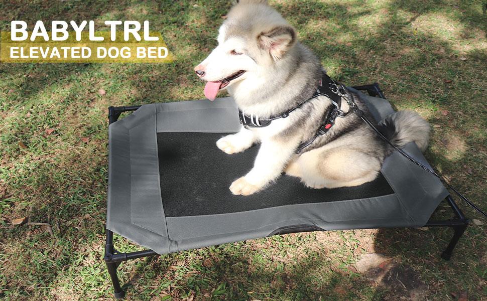 Elevated Dog Bed Pet Products Original Pet Cot