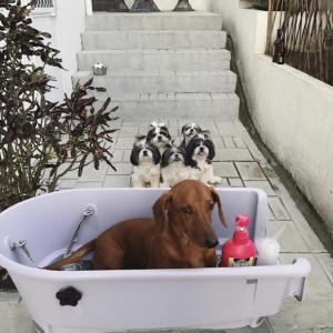 Booster Bath Medium